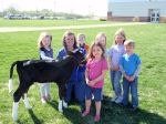 The Preschoolers and the calf