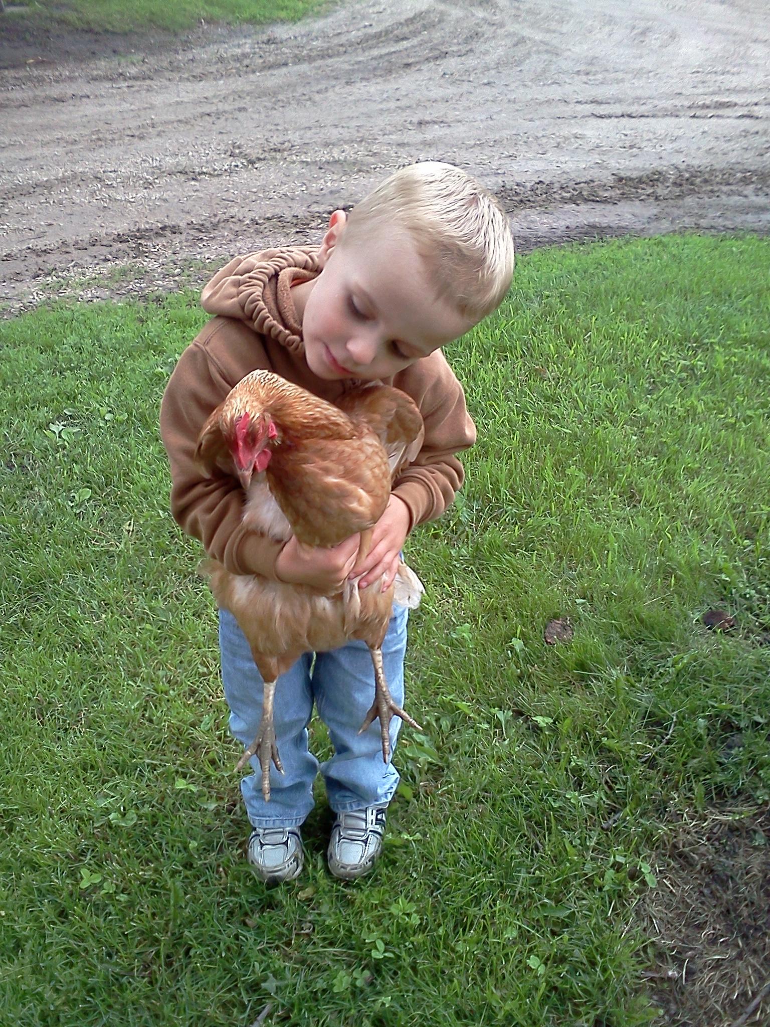 chicken, jonnie, summer, 2011