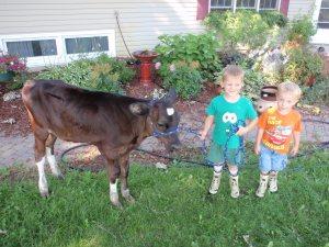 calves, erik, jonnie, fair
