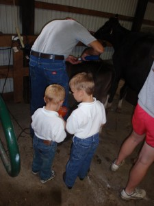 erik, jonnie, calves, dakota county fair, 2011