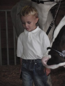 jonnie, calves, dakota county fair, 2011