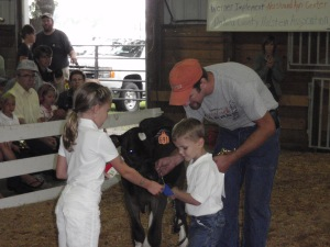 erik, tim, calves, dakota county fair, 2011